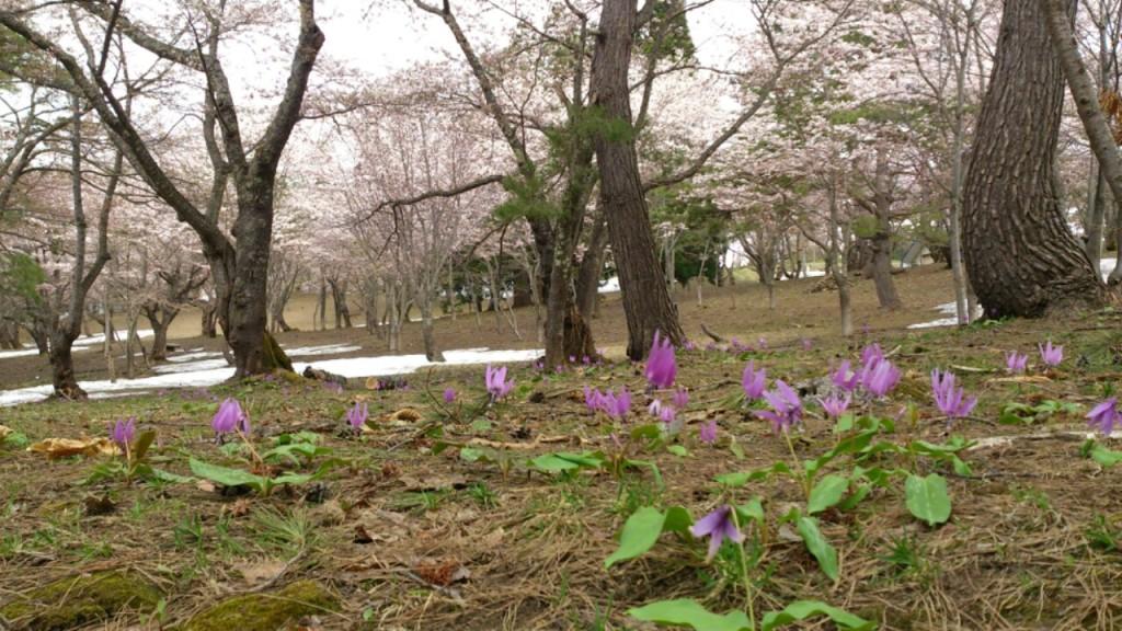 五月の桜林 dairoku