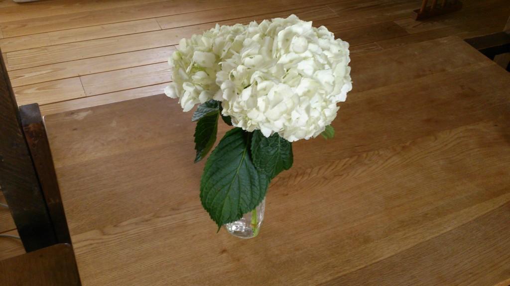 dairoku 白紫陽花