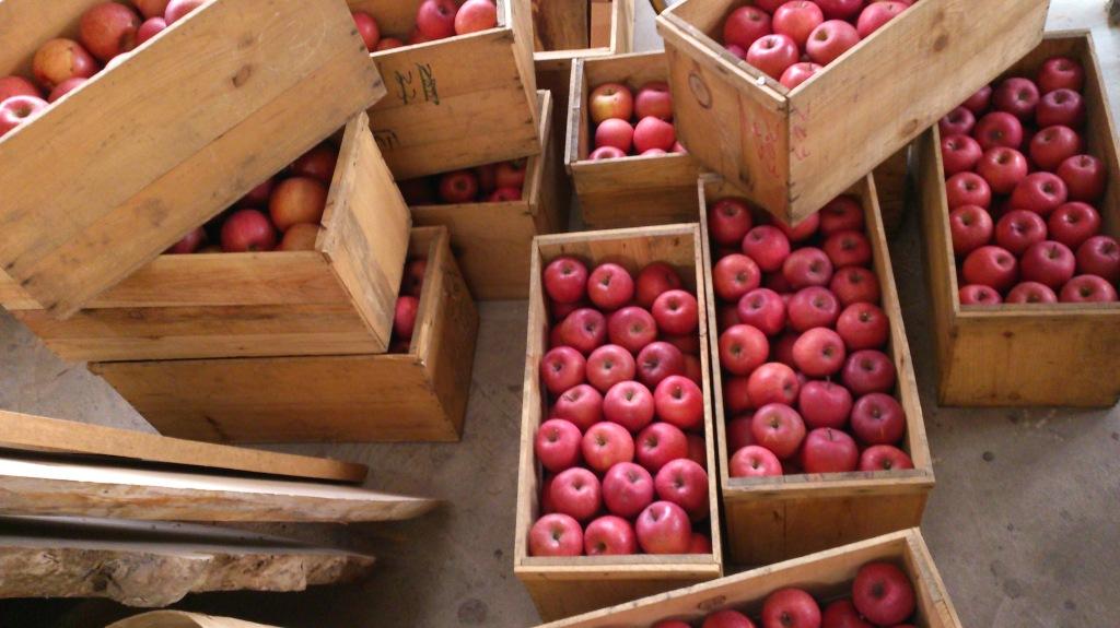 dairoku 2015 12 apple