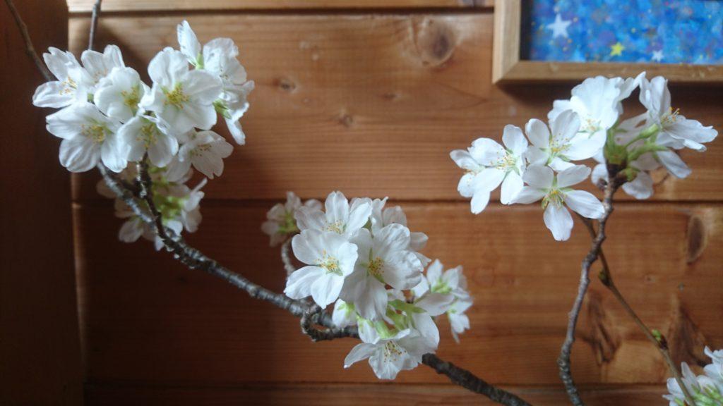 dairoku 2017 4 genkan sakura