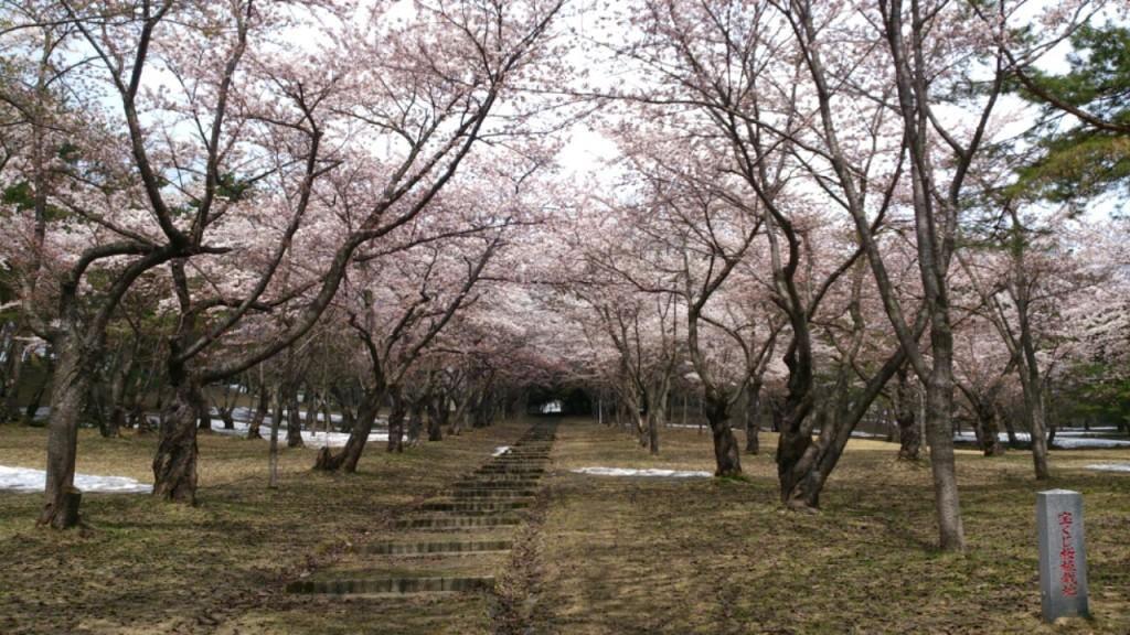 五月 桜林公園 DAIROKU