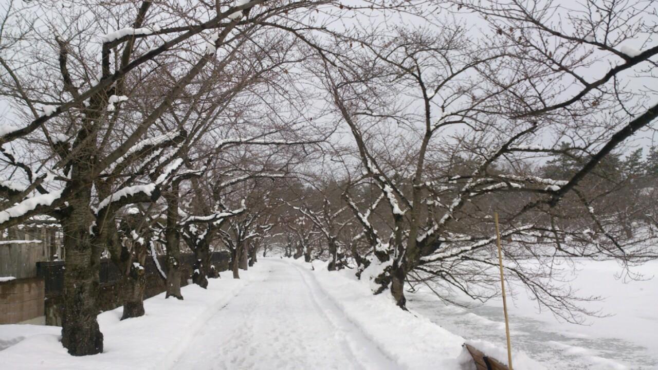 dairoku 2016 2 hirosaki park