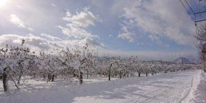 dairoku 2018 12 shimizumori snow