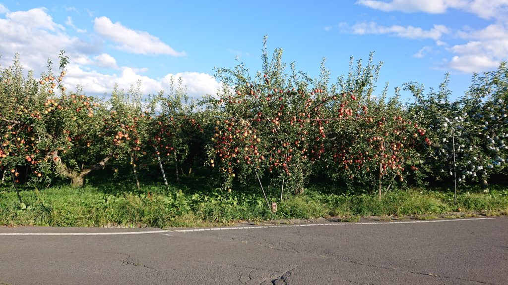 dairoku 2020 9 apple